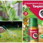 Танрек для борьбы с насекомыми
