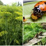 Биологические методы борьбы с насекомыми