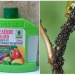 Зеленое мыло против тли