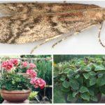 Комнатные растения от моли