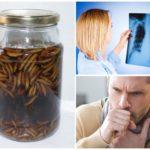 Применение настойки восковой моли при туберкулезе