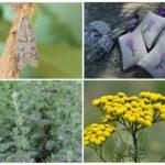 Растения отпугивающие моль