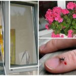 Способы защиты от насекомых
