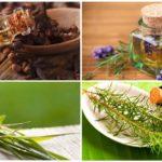 Эфирные масла для отпугивания насекомых