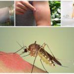 Последствия укуса комара