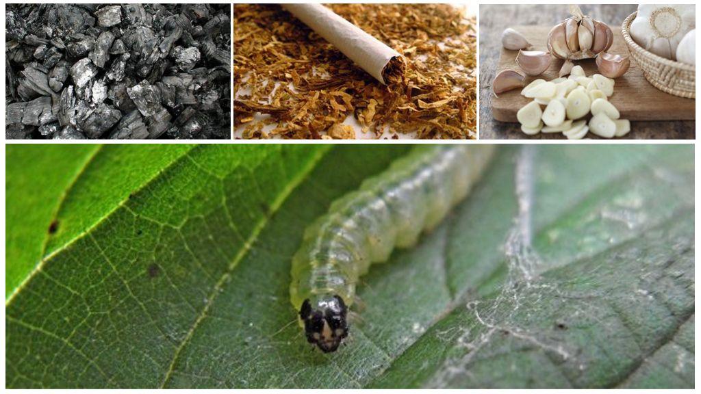 Народные методы борьбы с гусеницами на калине