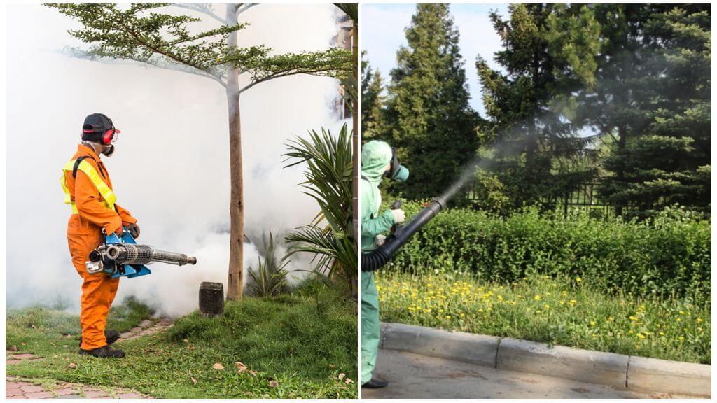 Специальные службы по уничтожению насекомых