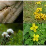 Травы для борьбы с паразитами