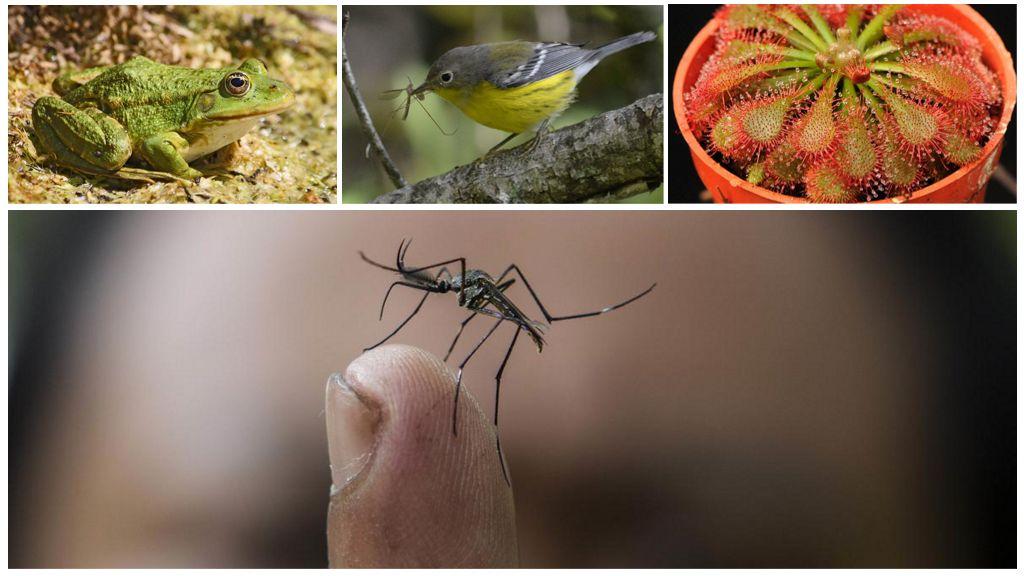 Комары и их враги