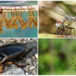 Личинки комаров - еда для насекомых
