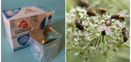 Аквафумигатор для борьбы с мухами