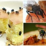 Еда для мух