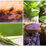 Эфирные масла для борьбы с мухами
