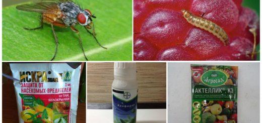 Препараты от малиновой мухи
