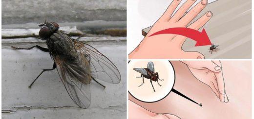 Поймать муху руками