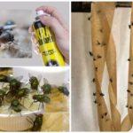 Способы борьбы с мухами в туалете