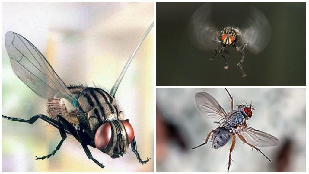 Полет мухи