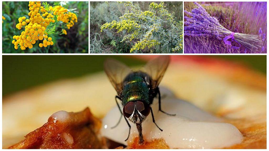 Ароматические травы от мух