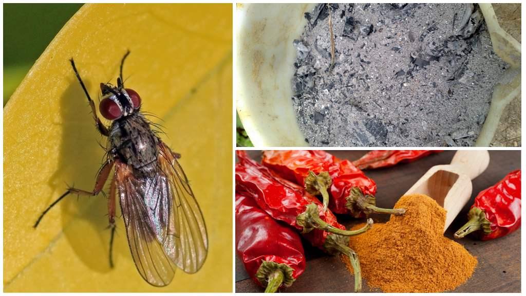 Народные средства от капустной мухи
