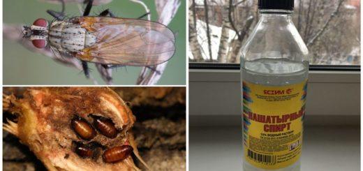 Нашатырный спирт от луковой мухи