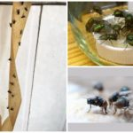 Борьба с синими мухами
