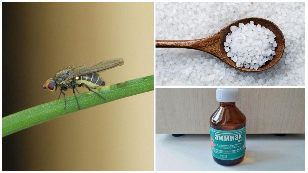 Соль и аммиак от луковой мухи
