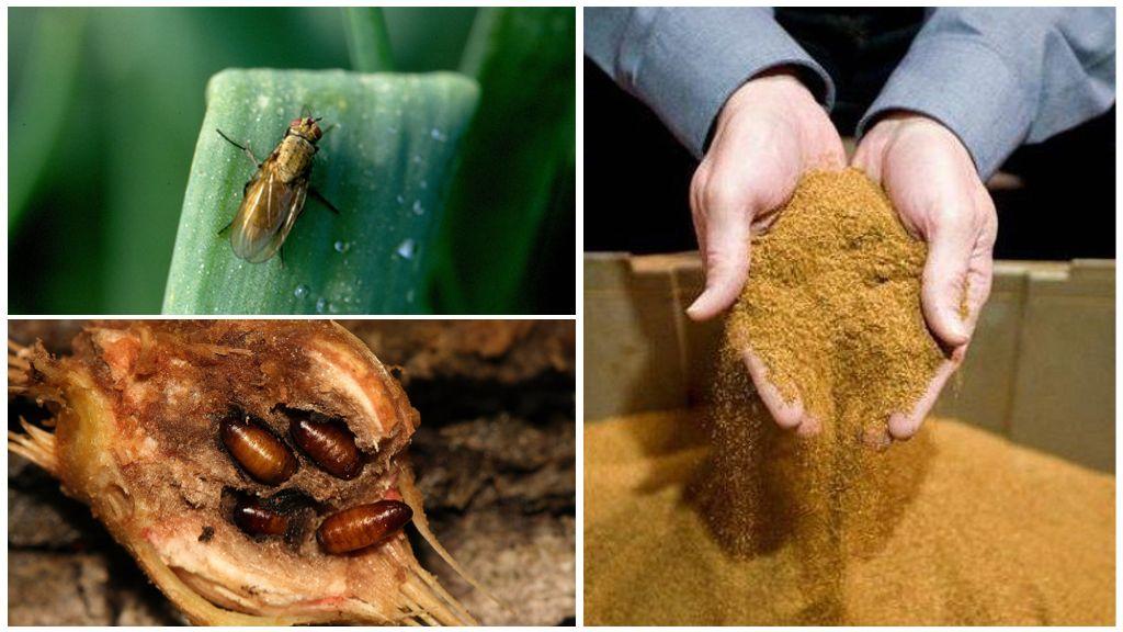 Табачная пыль от луковой мухой